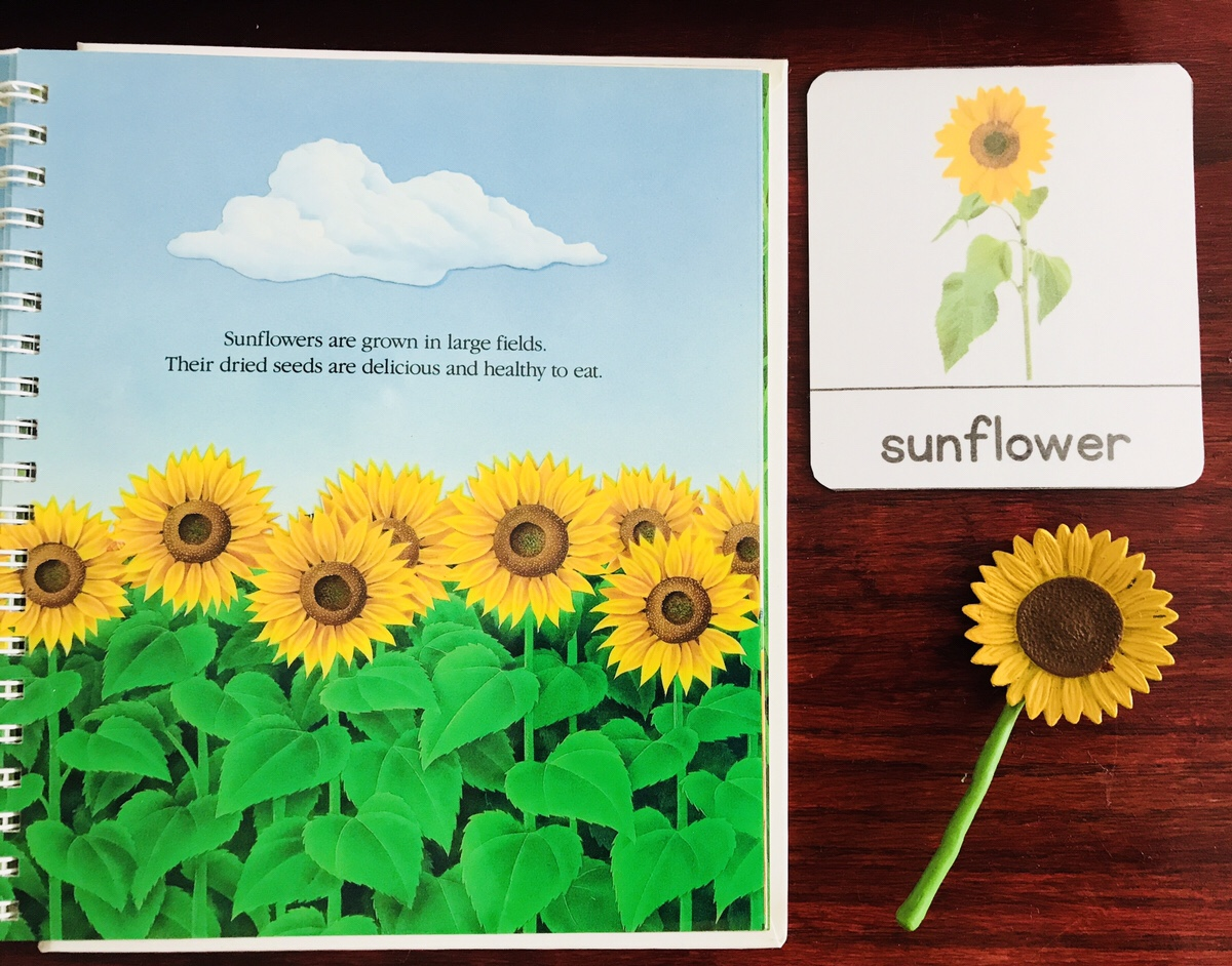 Montessori Botany- Flower Unit Presentation For Preschool